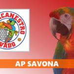SERIE D – AP Savona: «Ultime speranze perse, svantaggio maturato prima dell'intervallo»